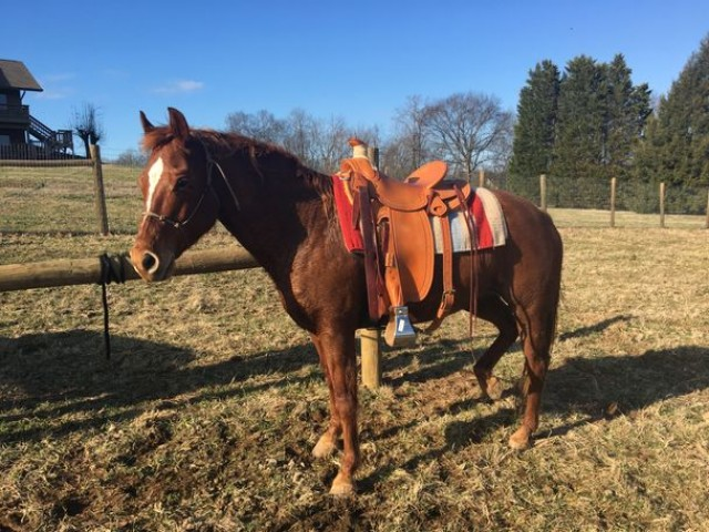 Quater Horse for a good home to for a the best companion