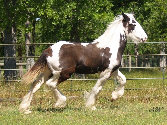 Price Reduced! Flashy F3 Drum Filly
