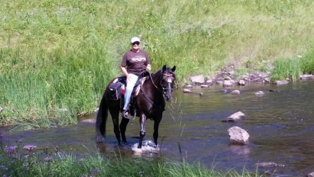 Kentucky Mountain, Gaited, Dancer