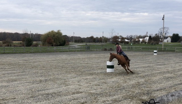 Harley Quinn is a 16.2 chestnut OTTB